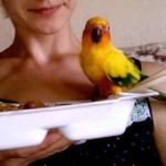 Beeda's parrot