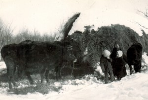 Kids & Cows