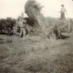Making Hay 1