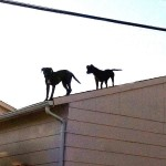 Dogs on Roof