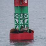 Sea lions on a bouy