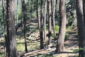 Sheridan Lake Trail