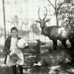 Aunt Laure and the deer