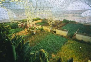 plants-in-biosphere-2
