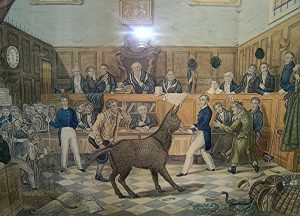 donkey-on-trial