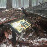 Iconic Redwood 3